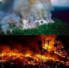 The Amazon forest burning by weeks: why do we have news about just now?